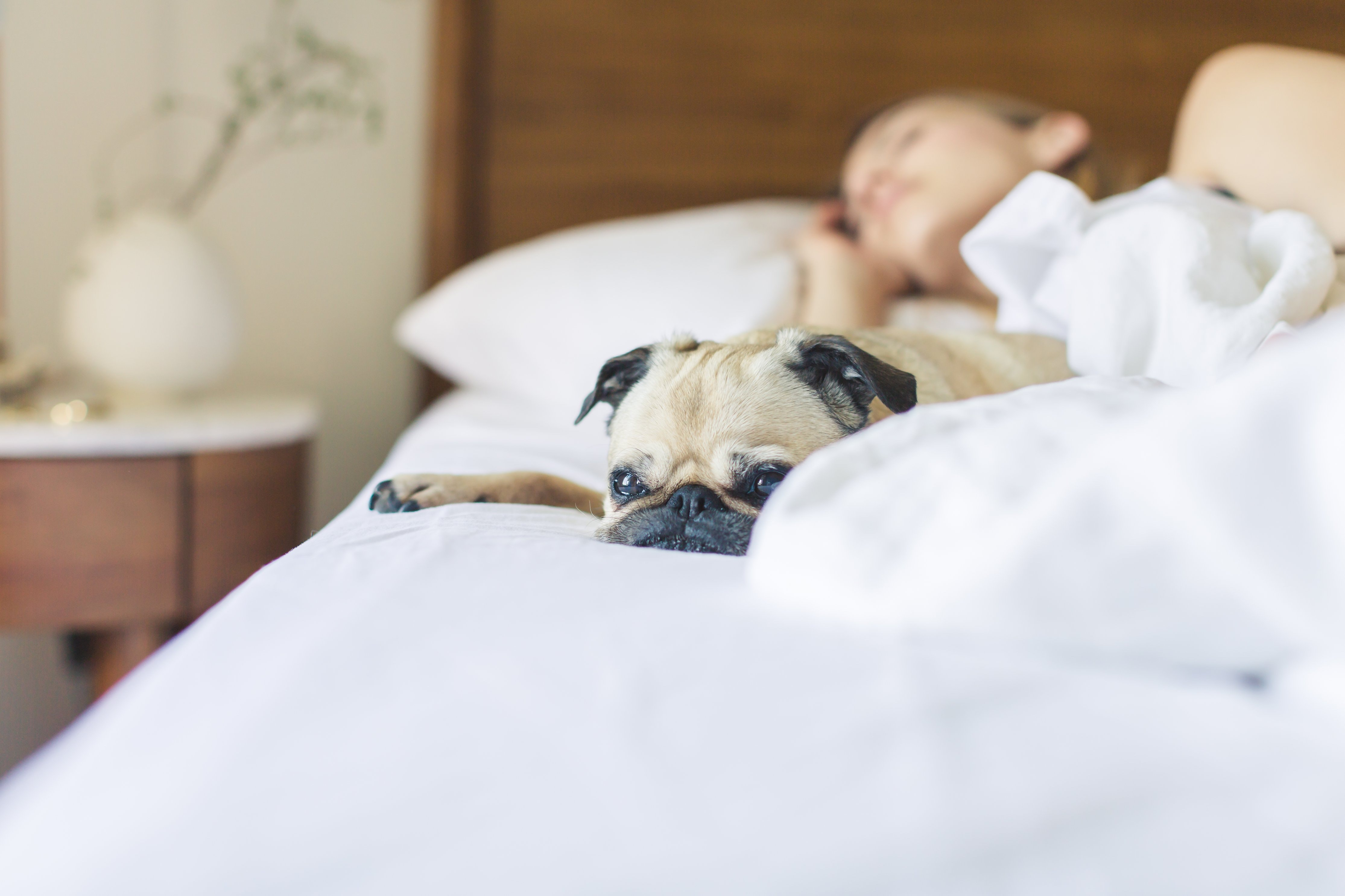 Why sleep matters for workplace health